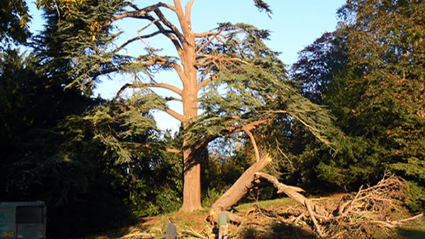 Photo of Tree Surgery by George Potbury Forestry